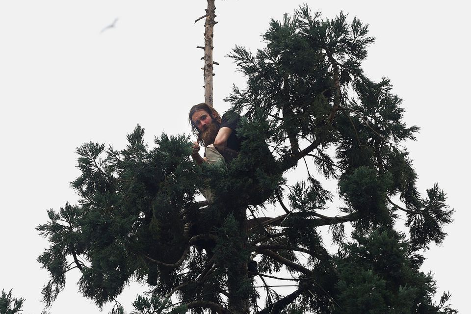 A man climbed an 80-foot tall tree in downtown Seattle on Tuesday.