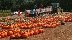 Workers unloaded pumpkins at Parlee Farms in Tyngsborough.