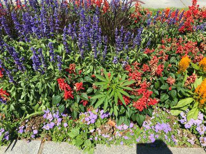 Superb Police Find Suspected Marijuana Plants In Flower Beds Download Free Architecture Designs Scobabritishbridgeorg