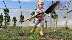 Alexinah Nyaigoti, 3, uses a heavy shovel to help her family at The Flats Mentor Farm.