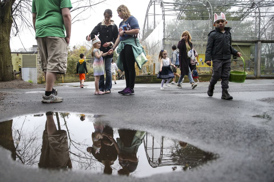 Puddles lined the grounds of Stone Zoo in Stoneham on Saturday.