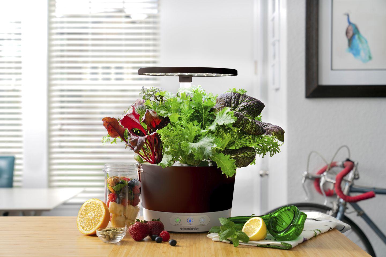 joy-of-gardening-indoors