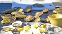 Maine is about more than lobsters; you'll find some great-tasting oysters, too.
