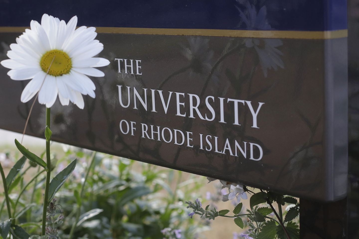 Here We Go: University of Rhode Island Professor Under Fire for Criticizing Political Left for 'Diving Headfirst Into World of Lies' by Supporting Transgender Movement