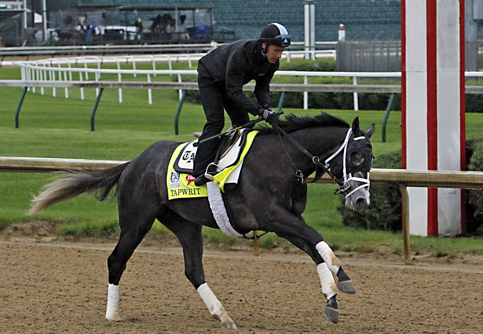 Tapwrit galloped under his exercise rider in a morning workout at Belmont this week.