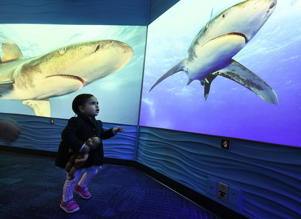 """Eleanor Buckley, 1, at a member preview of the """"Science of Sharks"""" exhibit at the New England Aquarium. The exhibit opens April 14."""