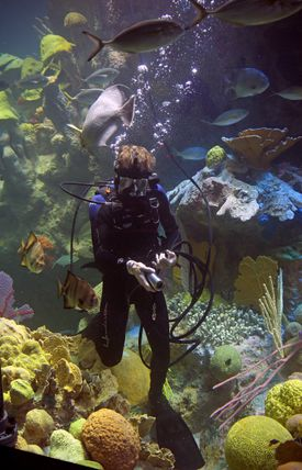 Diver Chris Bauernfeind used to interact only with the creatures in the New England Aquarium's Giant Ocean Tank. Now he interacts with his onlookers, telling visitors what he's doing and wearing a camera in his mask to show things from his perspective on screens around the tank.