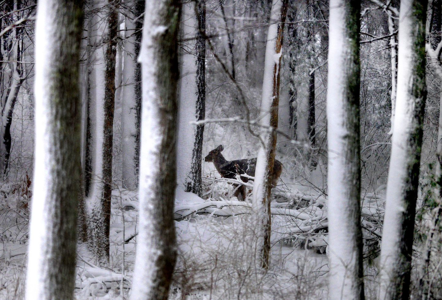 How do animals survive long winters? - The Boston Globe