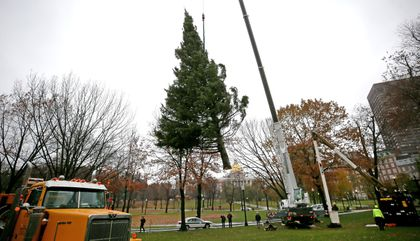An Evergreen Christmas.Christmas Tree Arrives At Boston Common From Nova Scotia