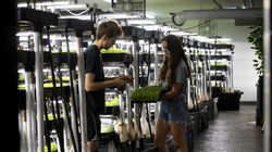 Boston Microgreens cofounder Oliver Homberg and farm manager Natalie Wannabaker stand next to the many growing racks in the South Boston urban farm.