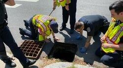 Members of the Belmont Fire Department helped rescue several ducklings from a storm drain on June 13.