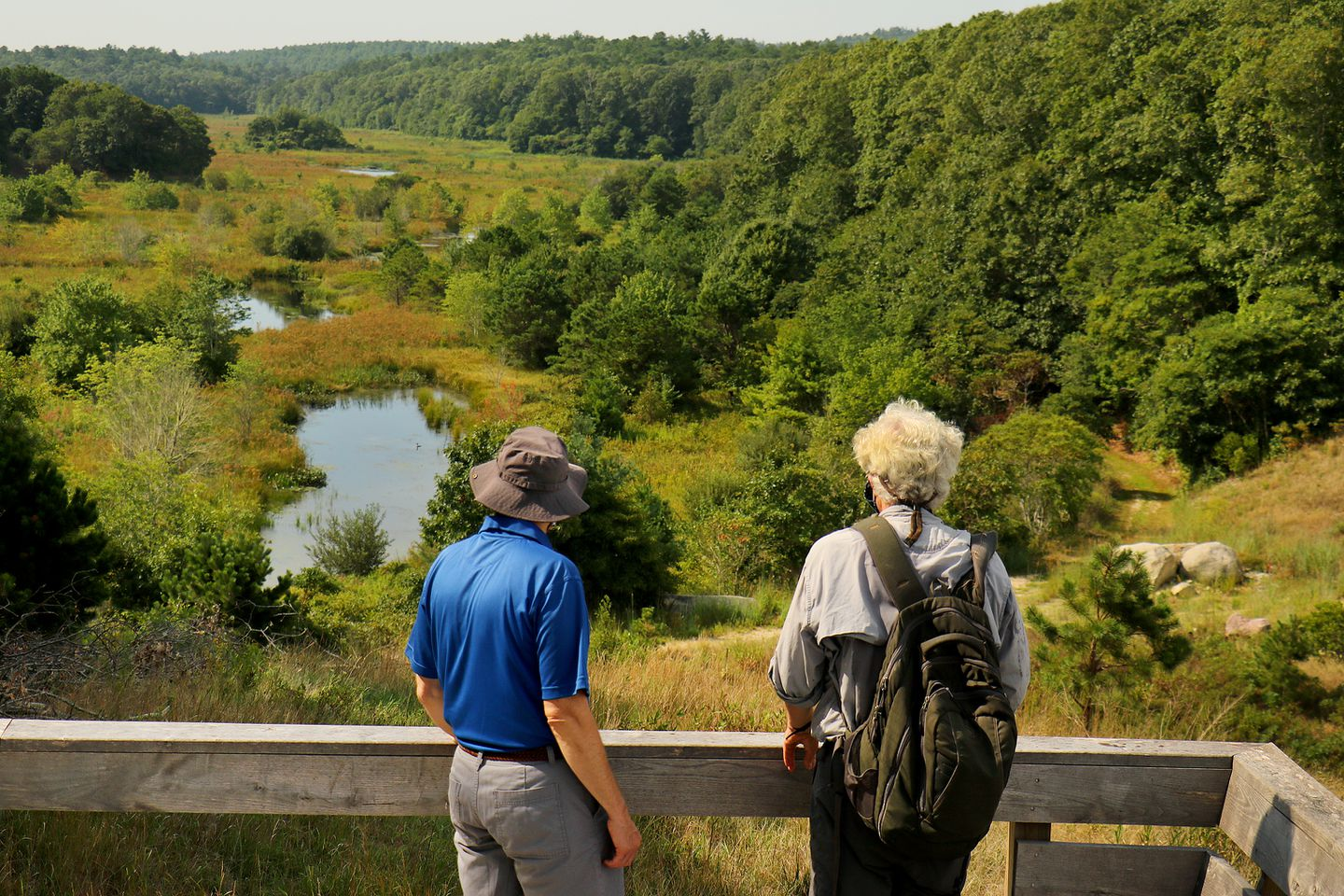 The view from a lookout of the former Tidmarsh cranberry bog, which is now a Mass Audubon Wildlife Sanctuary.