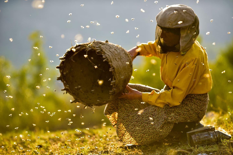 Image result for honeyland movie watch