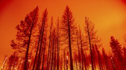 Trees burn after firefighters conducted a firing operation to slow the spread of the Dixie Fire in Plumas County, Calif.