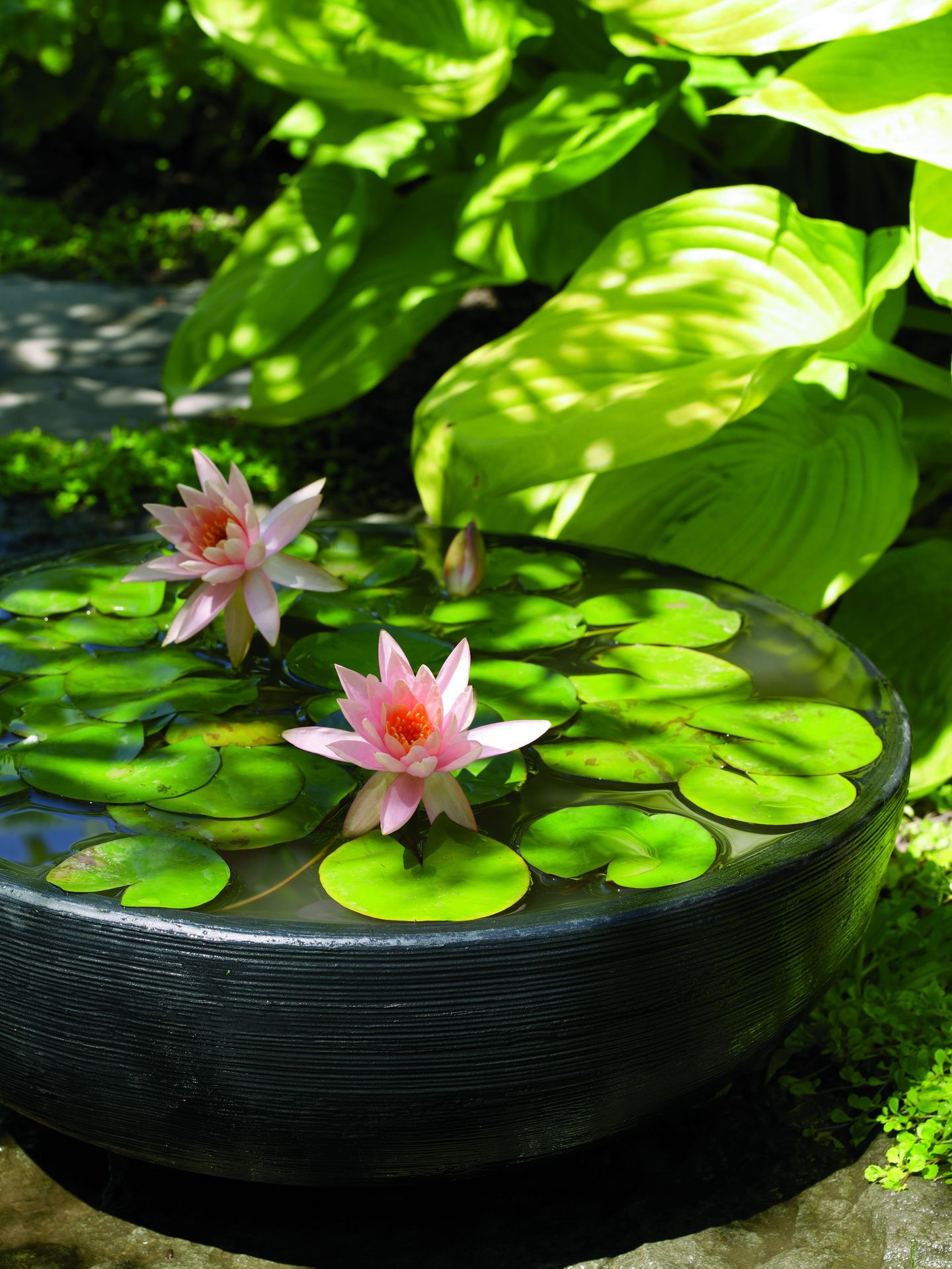 Make Your Own Outdoor Water Garden The Boston Globe