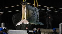 Mystic Aquarium employees used a crane to lower a beluga whale into its new home on Friday evening.