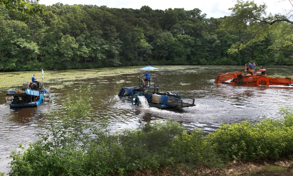 The state had crews using mechanical harvesters to uproot invasive water chestnuts from the Charles River in Waltham last month.