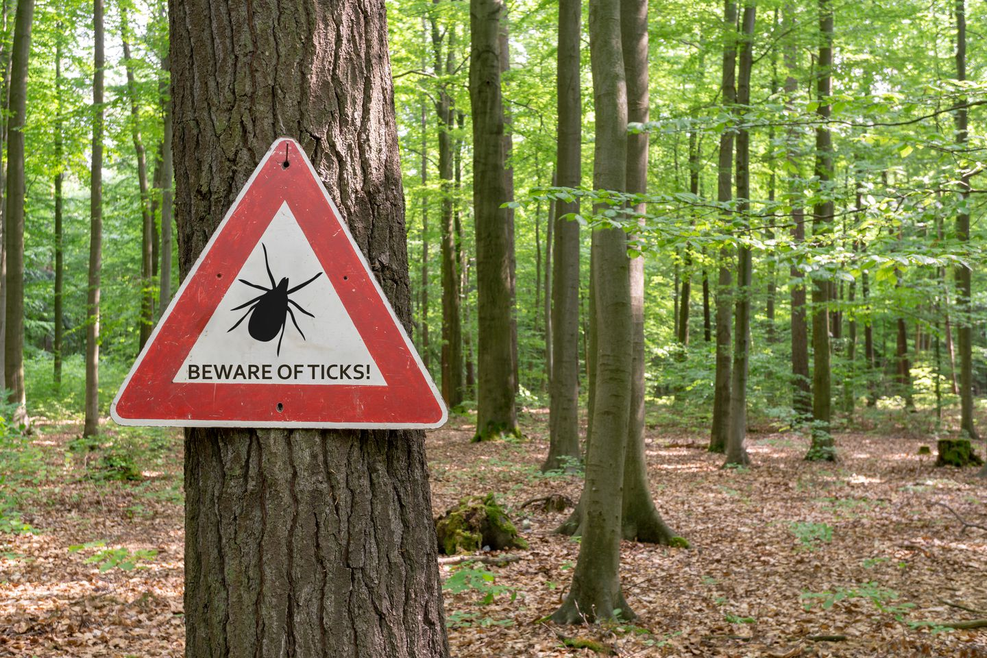 Will Bug Repellent Clothing Protect You From Being Bitten The