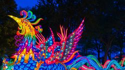 At Franklin Park Zoo's Boston Lights show this year, there's a 164-foot-long phoenix located where the dragon was last year.