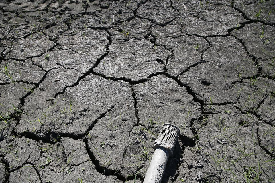 Cracked earth and a hose in a dried-up pond that is usually used to irrigate crops at Siena Farms in Sudbury.