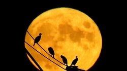 A Harvest moon rose above the Plymouth Harbor as cormorants are silhouetted as they sat on the rigging of the Mayflower ll ship on Monday.