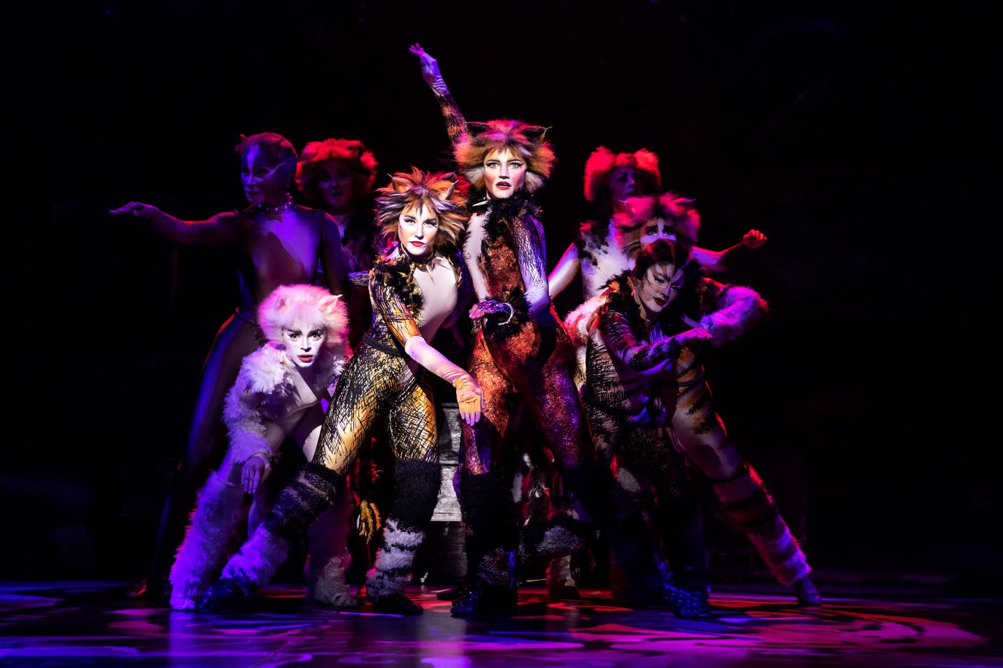 Choreographer Imagined Cats Then He Reimagined It The