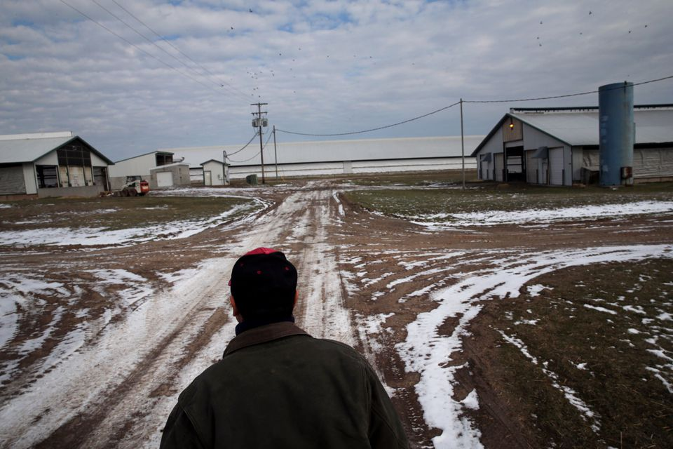 Sergio, from Mexico, is among thousands of immigrants at work on US dairy farms.