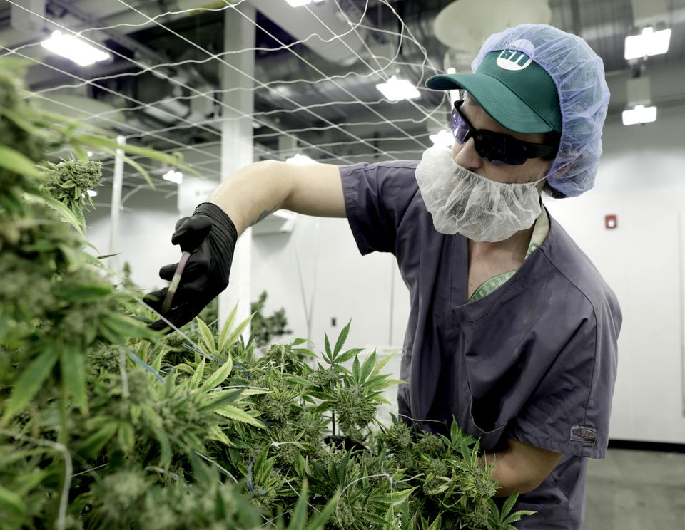 Green Thumb Industries, a Chicago-based cannabis company, invested $10 million to create a cultivation center in a former Holyoke mill building.