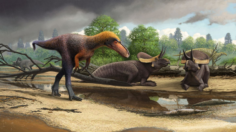 Terribly Tiny: 3-Foot, 90-Pound Tyrannosaurus Rex Cousin Identified