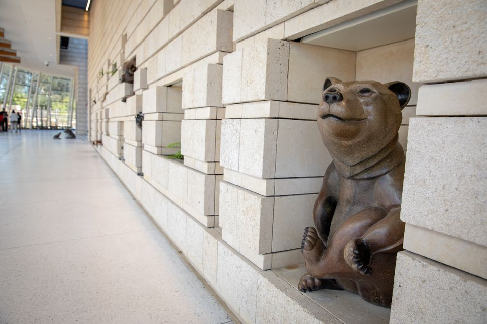 A statue of an extinct California Grizzly Bear greeted visitors to the new Lucile Packard Children's Hospital.