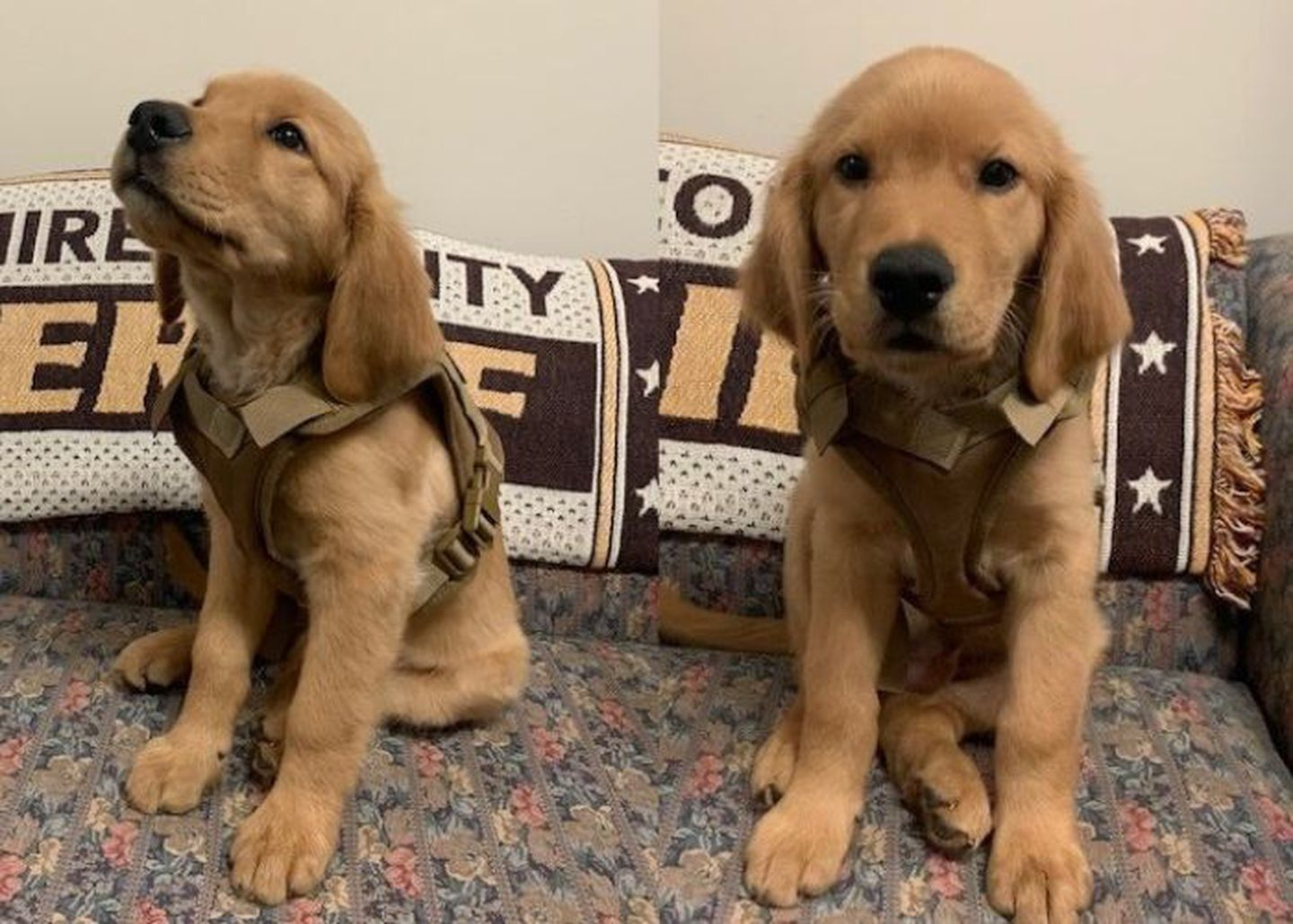 Puppy is newest deputy in training at sheriff's office in