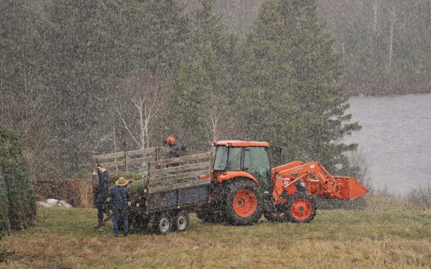 A pair of Amish, in falling snow, hired to help with the Christmas tree harvest at Windswept Farm in Barton, VT.