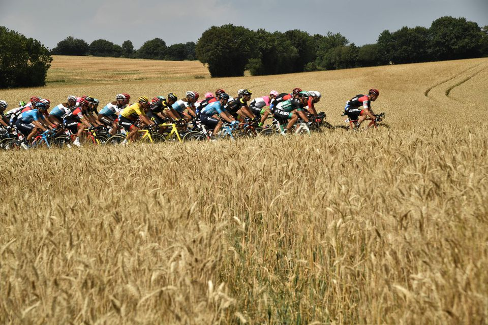 Tour de France riders zoom through a field of wheat