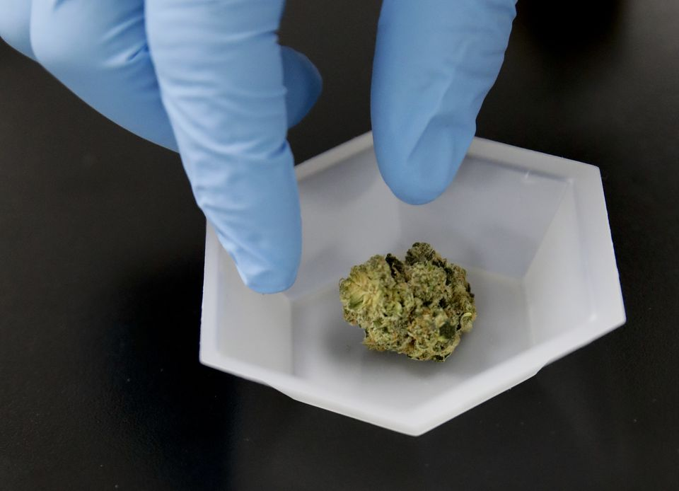 In this Wednesday, Aug. 22, 2018, photo, a marijuana sample is set aside for evaluation at Cannalysis, a cannabis testing laboratory, in Santa Ana, Calif. Nearly 20 percent of the marijuana and marijuana products tested in California for potency and purity have failed, according to state data provided to The Associated Press. (AP Photo/Chris Carlson)