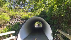 A tunnel along the Cape Cod Rail Trail.