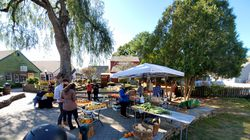 The Brown Dog Farm stand at the 2020 garlic festival.