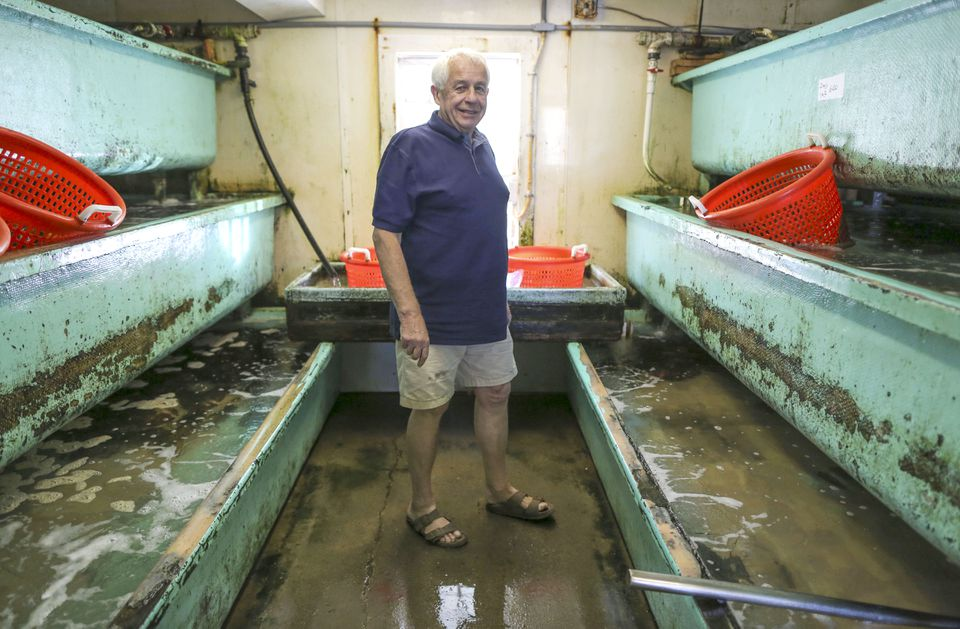 "Frank Collins, 72, owner of The Lobster Pound, a small seafood market in Plymouth, said of the nuclear plant, ""I haven't seen any effect on the seafood or lobster."""