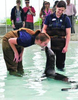 Getting up-close with seals is among the programs the aquarium is launching this summer giving visitors a hands-on experience for an additional cost.