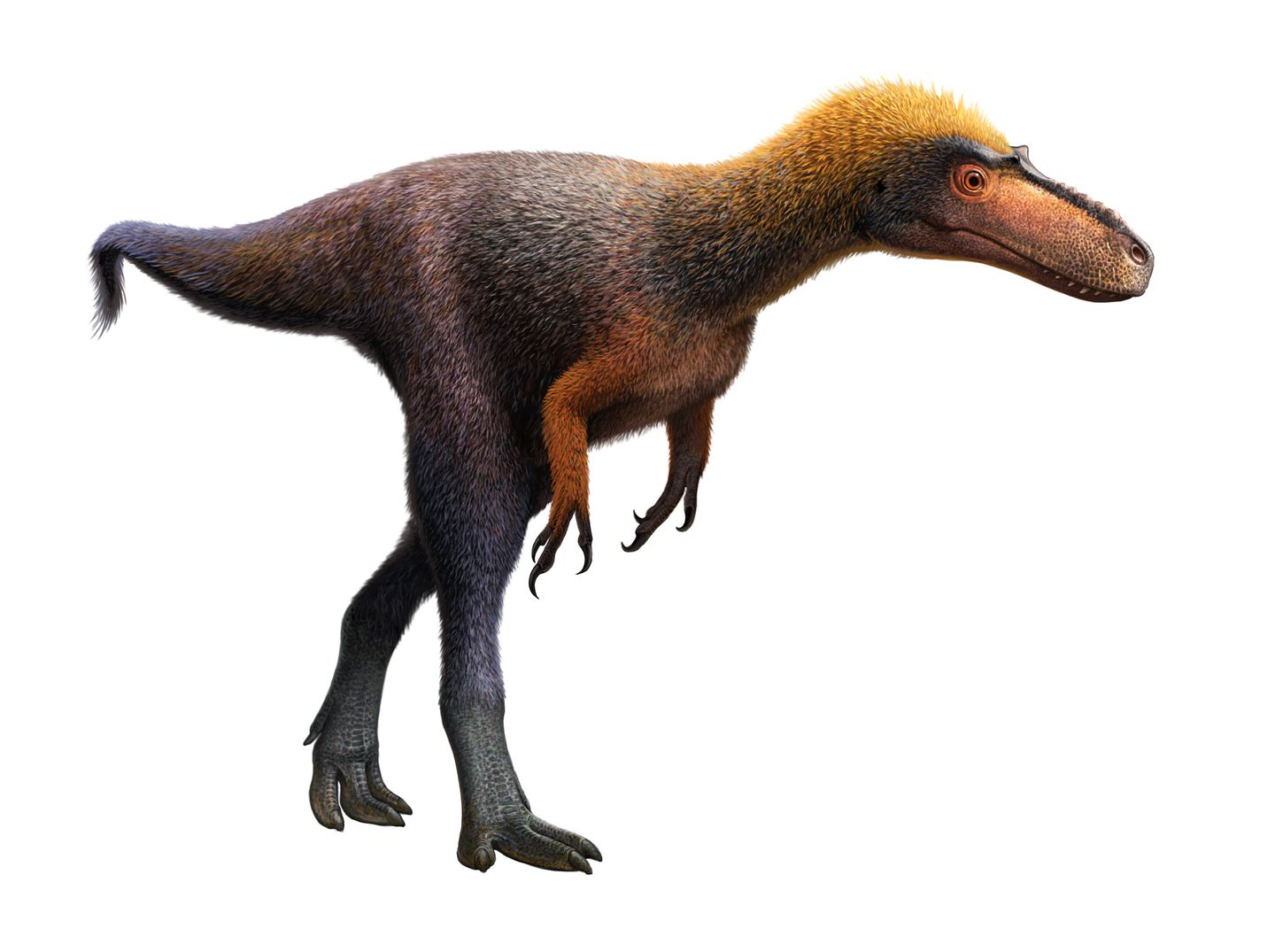 In the past, Relative of the Tyrannosaurus rex identified