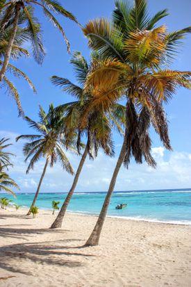 Palm trees on Anse du Mancenillier St. Francoise, Guadeloupe.