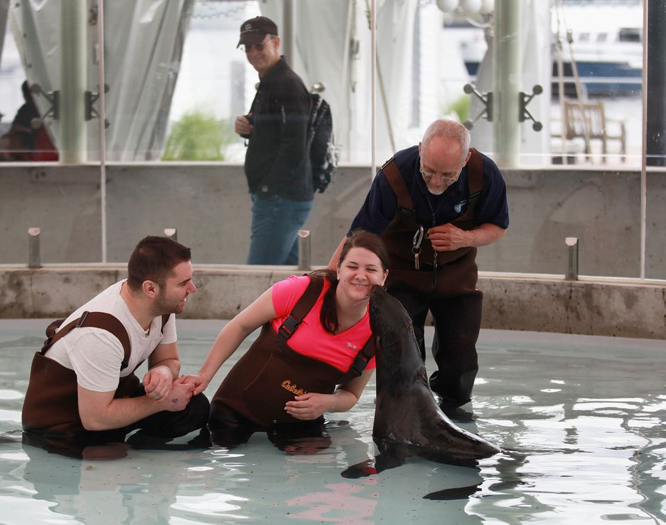 Brittany Miller treated her boyfriend Steve Spano (left) to a visit with a fur seal at the New England Aquarium. Paul Bradley (right) is a seal trainer.