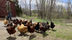 Chicken-keeping class at Miraval Berkshires with instructor Tess Fedell.