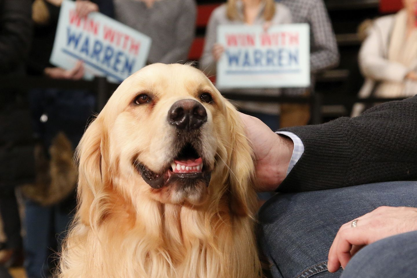 In the Democratic primary, my dog is voting for . . . - The Boston ...