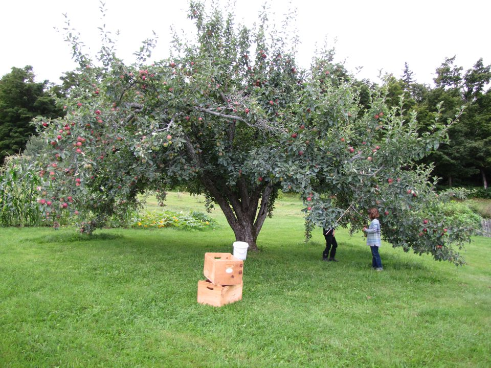 "<span id=""U741472638640TDF"" style="""">You can pick your own apples and sample </span>cider at Bear Swamp Orchard & Cidery in Ashfield."