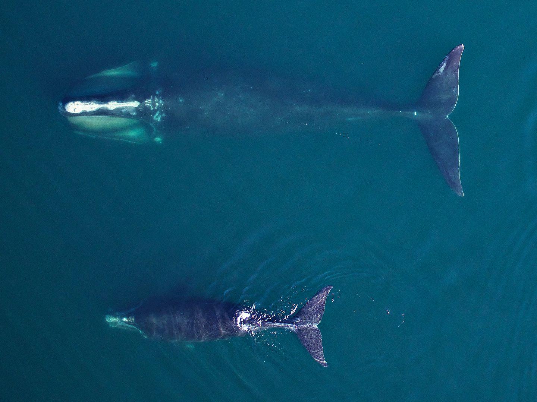 Boston Whales Print