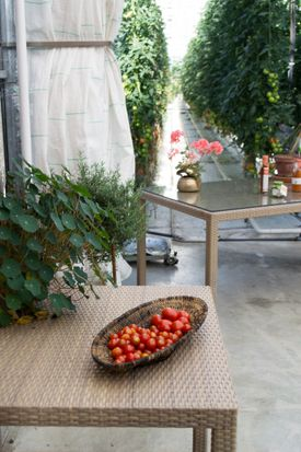 Freshly baked bread and fresh tomatoes greet customers in the cafe at Fridheimar, in Reykholt, Iceland, a farm that specializes in growing greenhouse tomatoes. The cafe (tables below left) is set inside one of Fridheimar's state-of-the-art greenhouses.